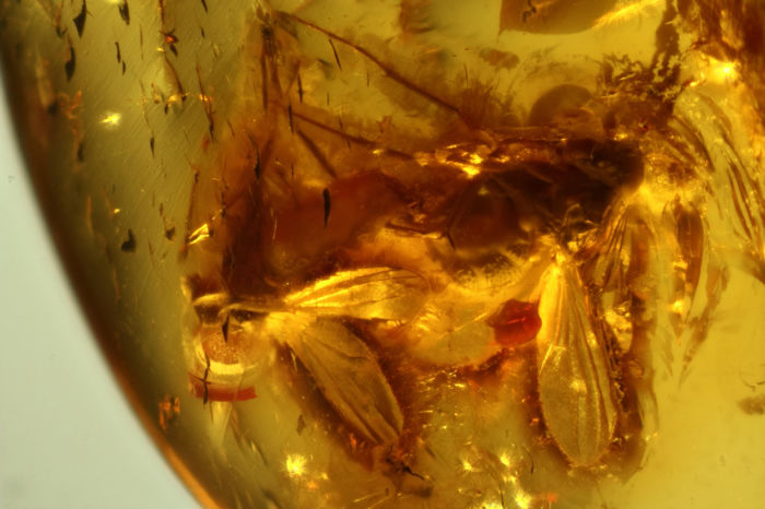 Couple of flies in copula in Baltic Amber - 5 mm long - Amber 2.1 x 1.2 cm