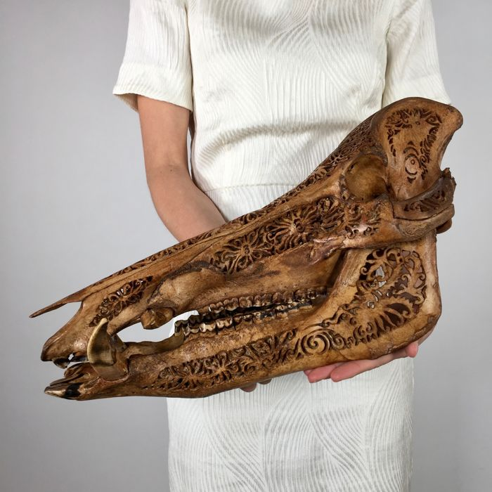 Carved Warty Pig Skull from Celebes - DAYAK - Borneo, Indonesia