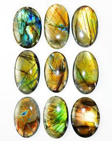 Premium Faceted Big Labradorite lot - all color flashes - 1105.00 ct - ( 9 pcs)