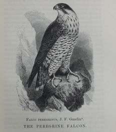 William Yarrell - A History of British Birds - 1871