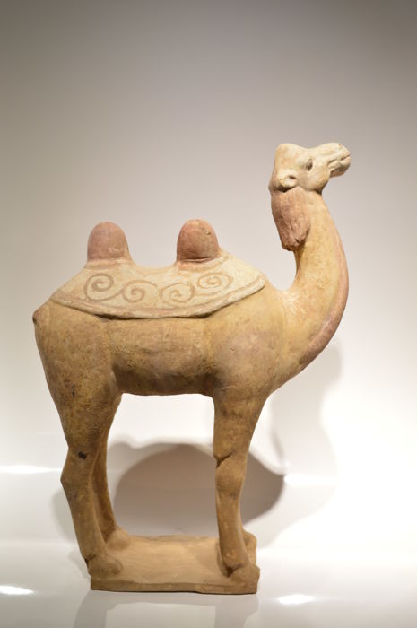 Tang dynastie - Camel   - Size H: 365 mm - L:  247 mm