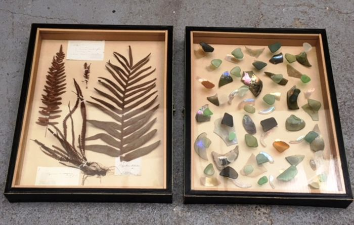 Collectors' Display Cases, one antique - Ferns and Beach-comber Finds -50 x 39 cm (2)