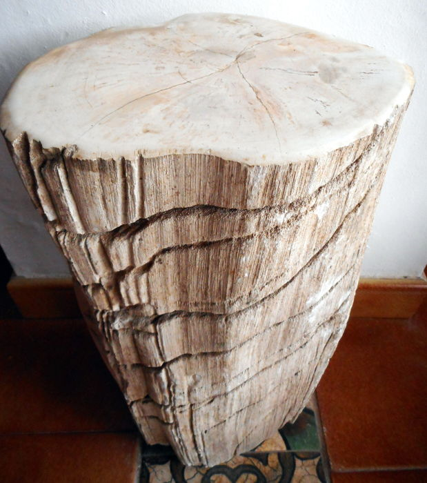 Mini side table from a trunk of petrified wood - 43 x 22 cm - 21,7 kg