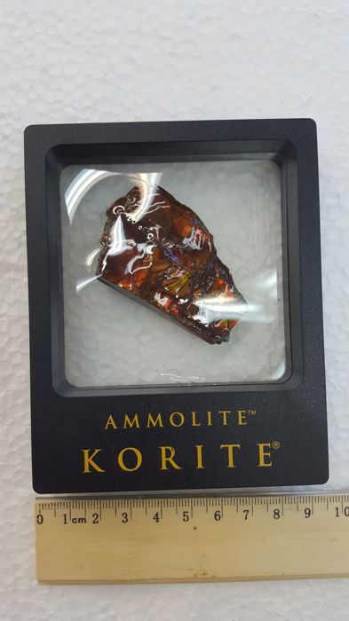 Primarily Red Ammolite Hand Specimen in Display Box