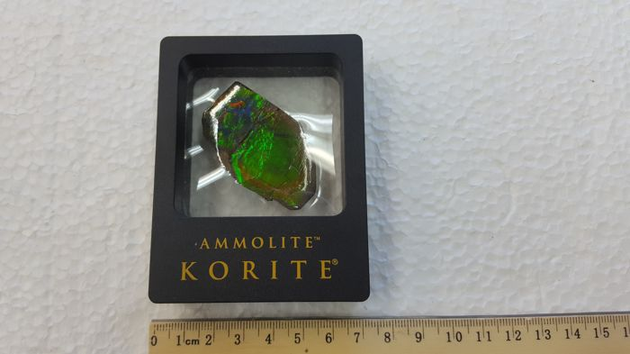 Ammolite Hand Specimen in Display Box