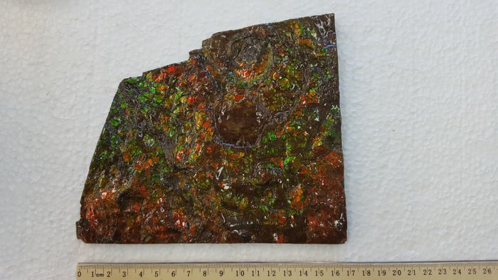 Very Large Multi-coloured Free Standing Ammolite Hand Specimen