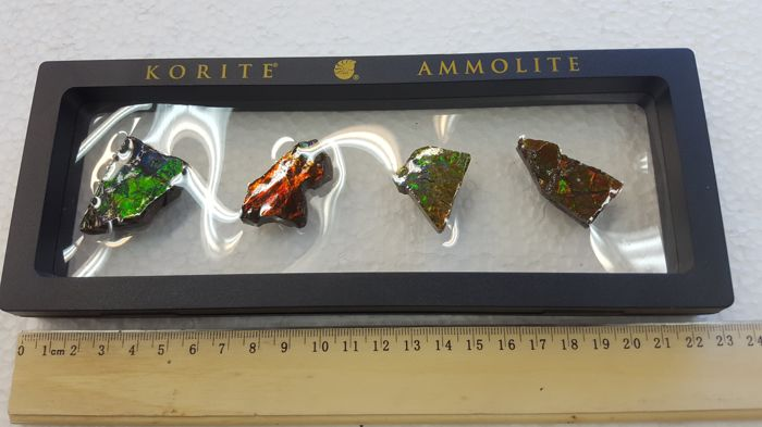 Collection of Four Ammolite Hand Specimen in Display Box
