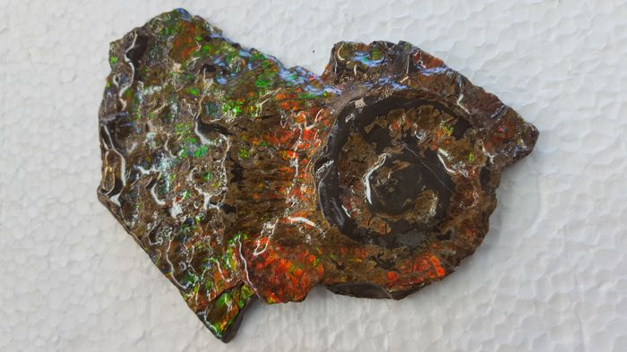 Large Multi-coloured Free Standing Ammolite Hand Specimen