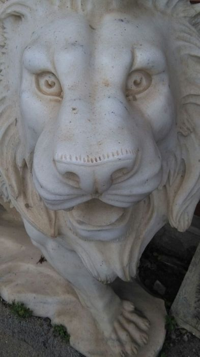 """Big lion in Carrara white marble """"Kimba the white lion"""" - recently made"""