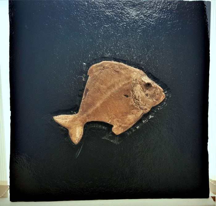 Decorative Fossil Art using Natural Black Limestone and a RARE Santana Fossil Fish. The fish is Arapipichthys,