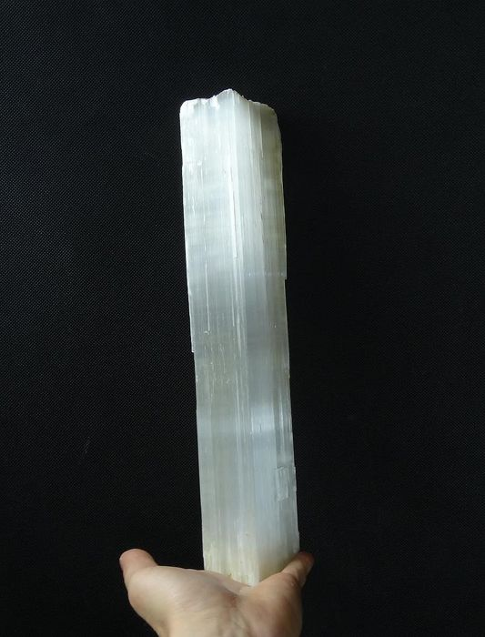 Selenite (var. Gypsum) - Giant crystal  - 35,0 x 7,5 x 4,5 cm - 1552 gm