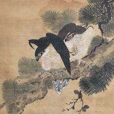 """Huge magnificent handpainted scroll - """"Hawks on Pine"""" (209 x 84,5 cm!) - Signed and sealed 'Harutaka' or 'Haruko' 春高 - Incl. old wooden box - Japan - ca. 1870"""