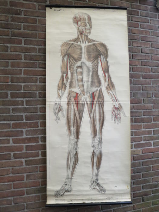 2 Large Ancient Medical Anatomy Wall Posters Of The Human Body
