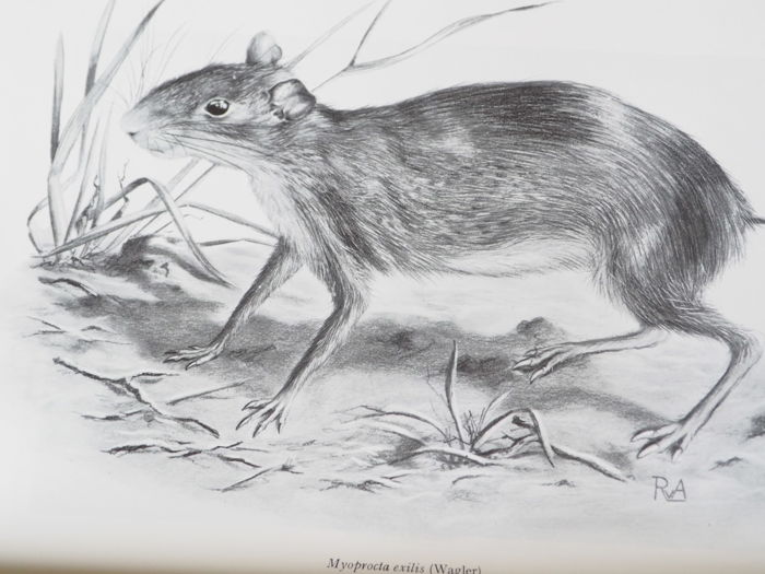 A.M.Husson - The mammals of Suriname - 1978 [Met:] The bats of Suriname - 1962