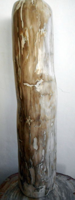 Trunk of petrified wood - 53 cm - 10 kg