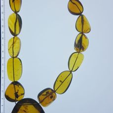 Chiapas Amber Necklace Excellent Quality, Transparency and Fluorescence