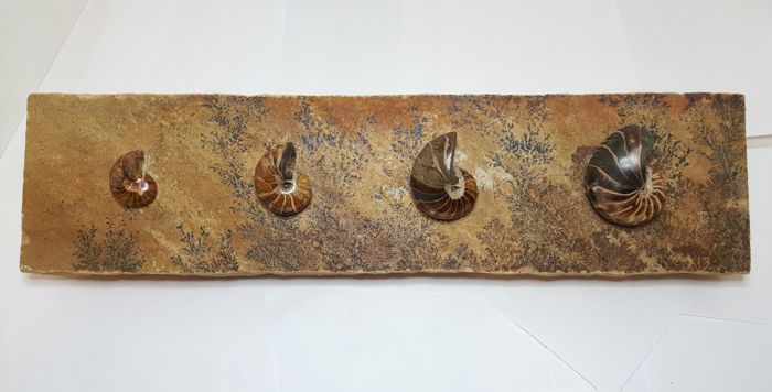 """Eternal Forest"" fossil art, produced in house by Fine Fossils."