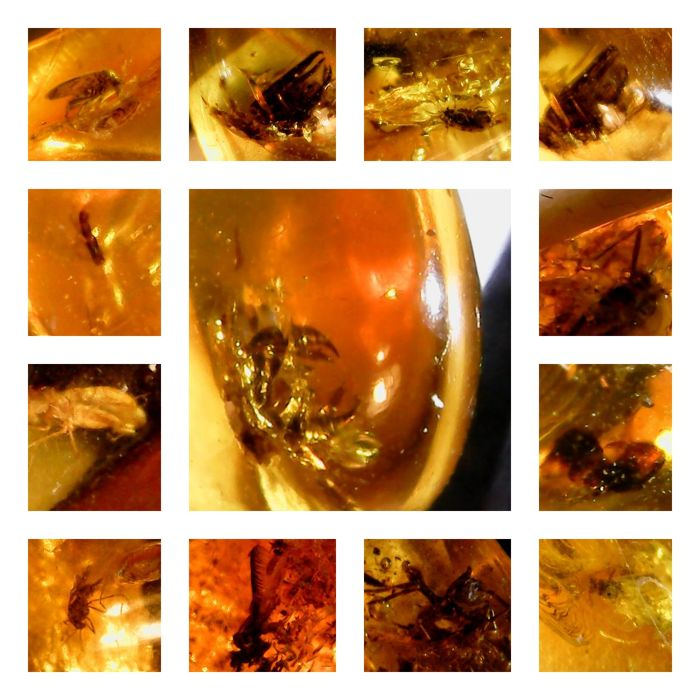 Polished Baltic Amber with Insect inclusions - 10-46 mm (9)
