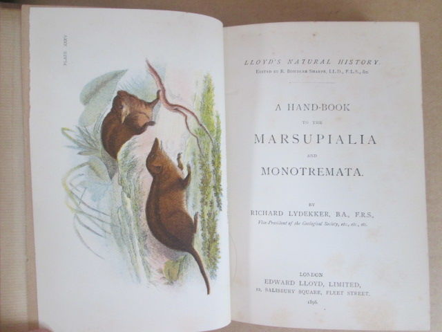 R. Lydekker - A handbook to the marsupialia and monotremata - 1896