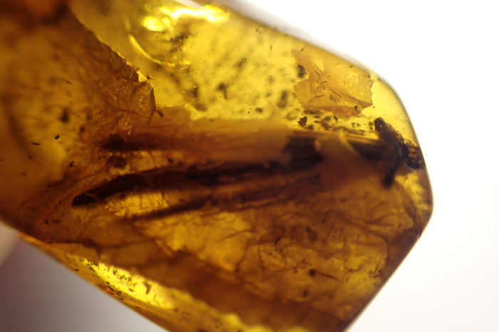 The wing of a large insect (1.8 mm) in a Baltic amber - 28 x 16 x 8 mm