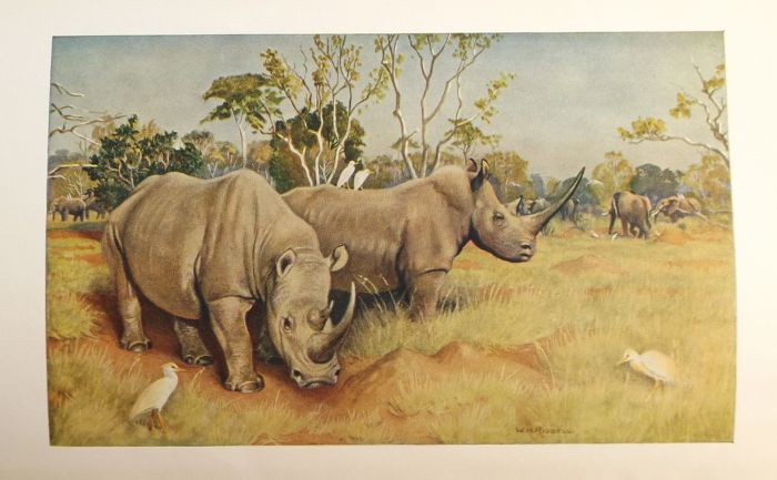 Capt. H. C. Brocklehurst - Game Animals of the Sudan - 1931