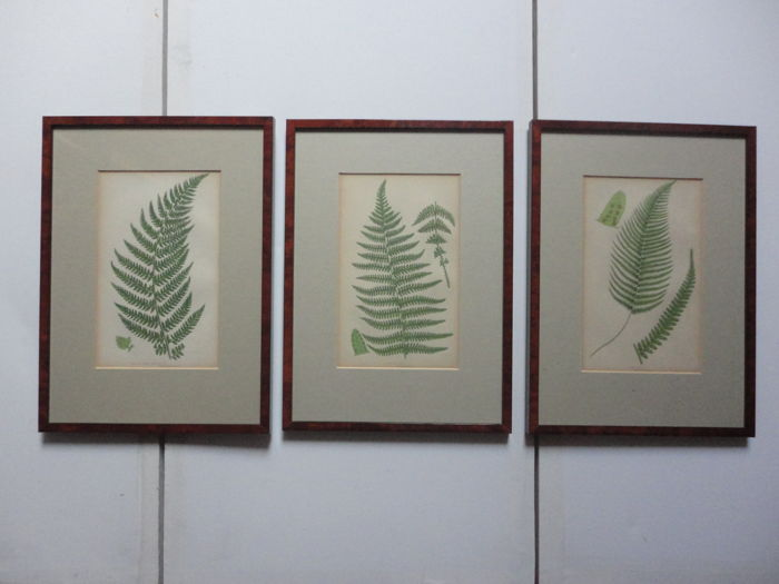 Series of three engravings of fern leaves framed with passe partout