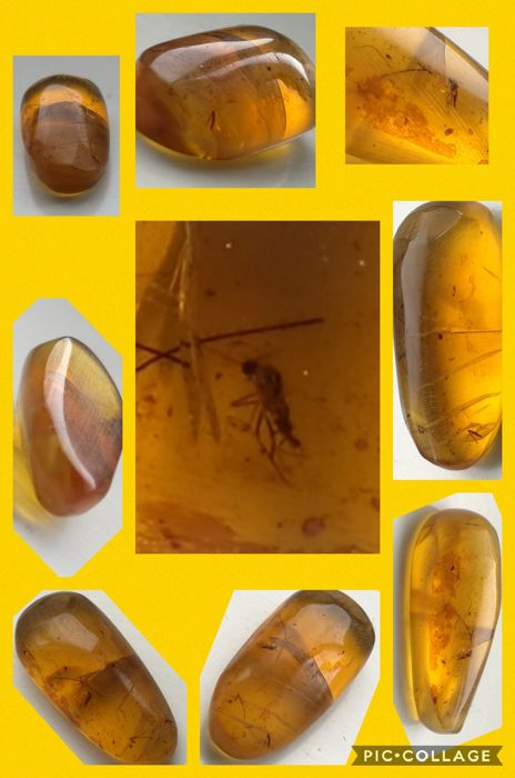 Burmese Amber with Insect inclusion - 21 x 6 x 6mm