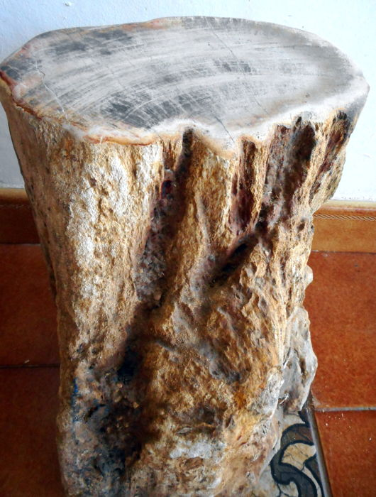Swell Mini Side Table Log Of Polished Petrified Wood 31 X 18 Cm 16 Kg Catawiki Inzonedesignstudio Interior Chair Design Inzonedesignstudiocom