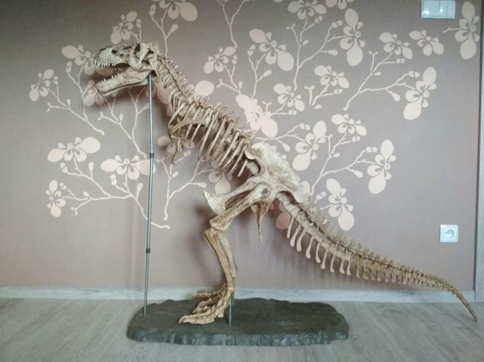 Detailed, solid T-rex dinosaur model - height: 120 cm , length: 200 cm