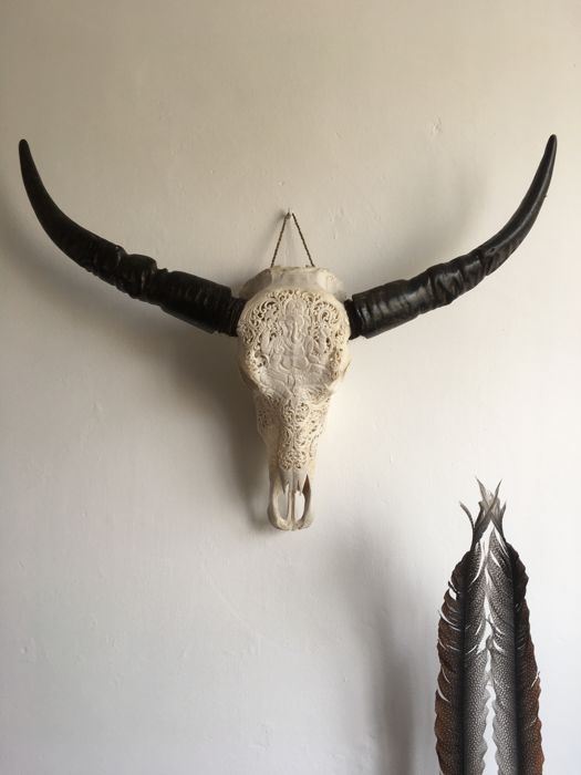 Engraved skull of a water buffalo - 92 cm - Bali - Indonesia