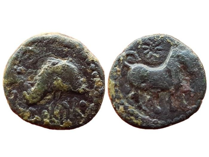 Ancient Hispania - Bronze coin, Semis of Asido, medina Sidonia (Cadiz) 200-101 B C - 22 mm / 11.6 g