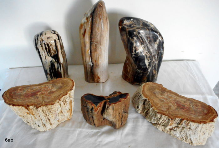 Petrified Wood collection - 80 to 225 mm - 8.4kg  (6)