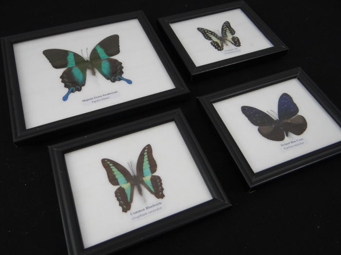 Nice collection of butterflies in a frame - 14.5 x 12 cm (4)
