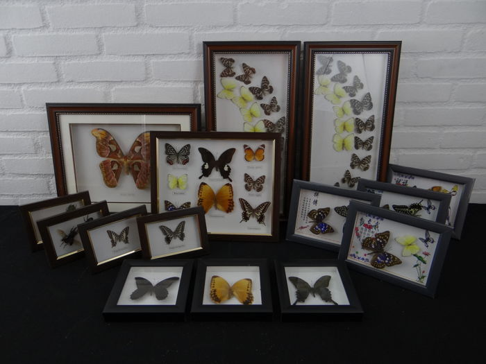 Large collection of various frames with Asian Butterflies (15)