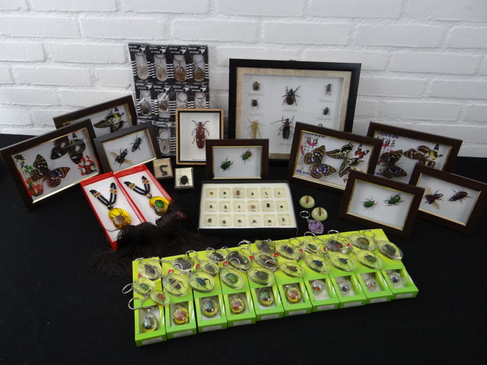 Interesting and varied Entomology Lot - specimens in Lucite, framed specimens - 3.5 to 18cm