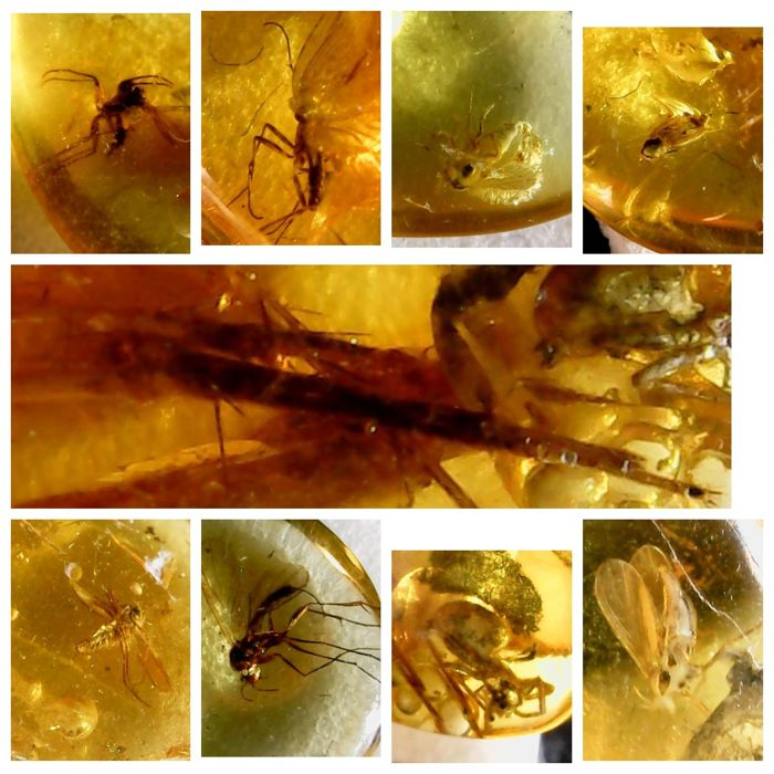 Baltic Amber with inclusions (Diptera) fly and other insects - 7-14 mm - 1,5 gm  (9)