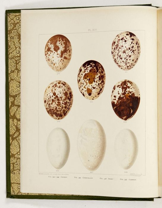 Arthur G. Butler -  British birds with their nests and eggs - 1896/1899