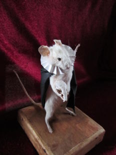 Mouse Full-body mount - mus musculus - 11 cm