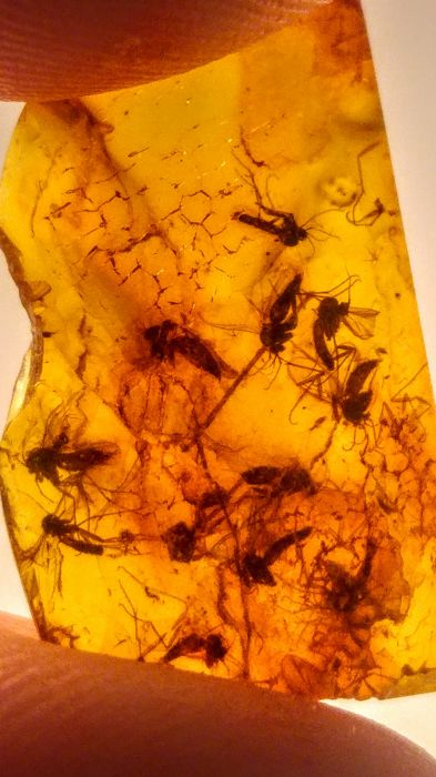 Baltic Amber with multiple Insect inclusions - 23mm