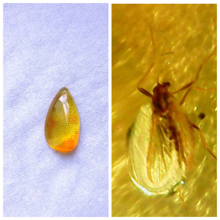 Polished Baltic Amber pendant with inclusions (Diptera) - 7x16x29 mm - 1,9 gm