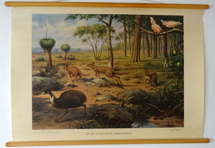 "Beautiful old original school poster on linen, ""from the Australian animal world"", signed by M.A. Koekkoek, in good condition."
