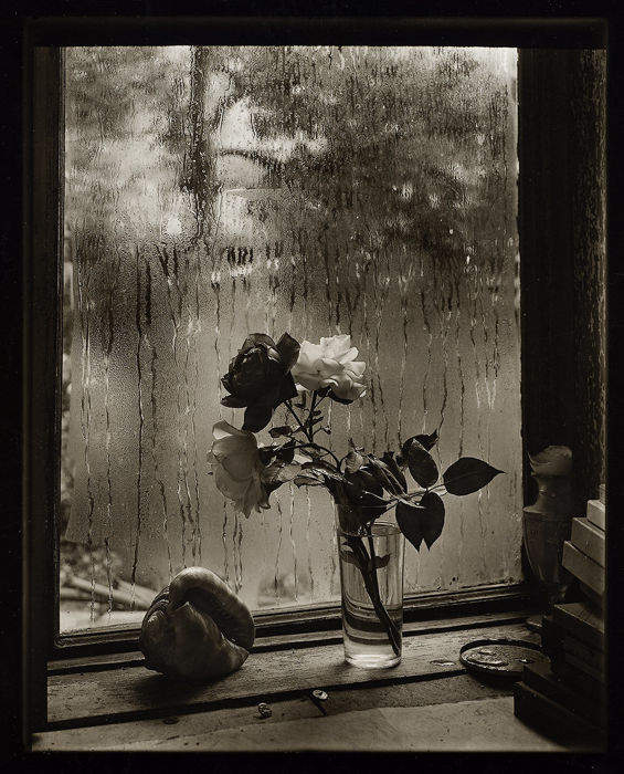 Josef Sudek (1896-1976) - The Last Rose, 1956