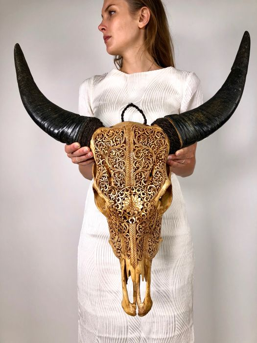 Brown Cow Skull with traditional Lotus engraving - Ubud - Bali - Indonesia - 21st century