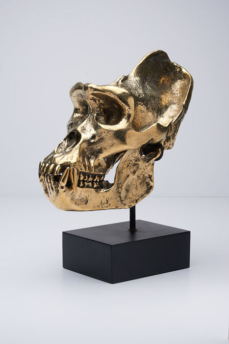 Replica Gorilla skull, cast in Bronze, with stand signed by the Artist - Gorilla gorilla gorilla - 36 x 28cm
