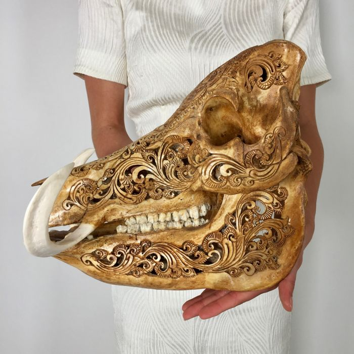 Wild boar skull with a brown patina and Barong carving - Ubud, Bali, Indonesia - 21st century
