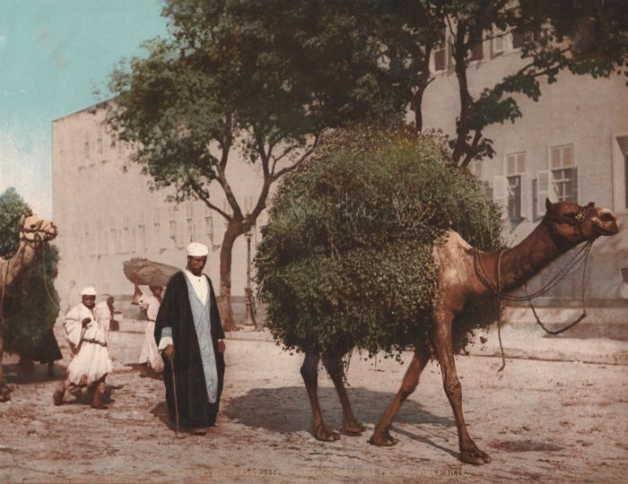 PZ. Photochrom - 2182. Kairo, fellahs transportant des fourrages