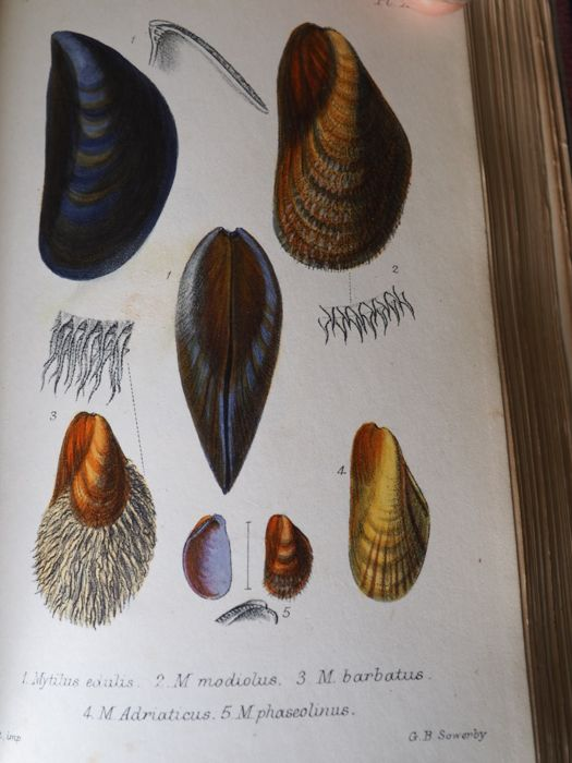 J.G.Jeffreys - British Conchology, or an account of the Mollusca  - 1862/1862