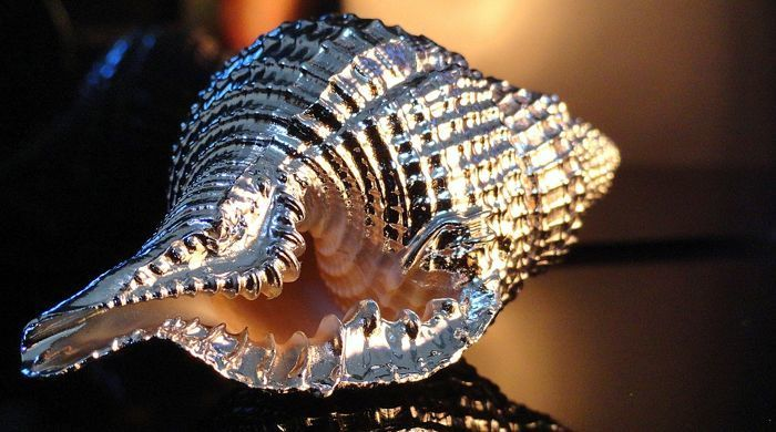 "Jewel of the sea ""Natural Seashell"" laminated in 925 silver by master silversmith in Milan, unique artwork"