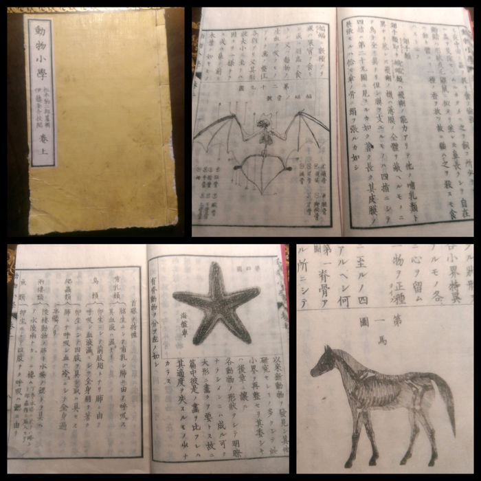 Japan; Dobutsu Shogaku  (study on animals) - 1871