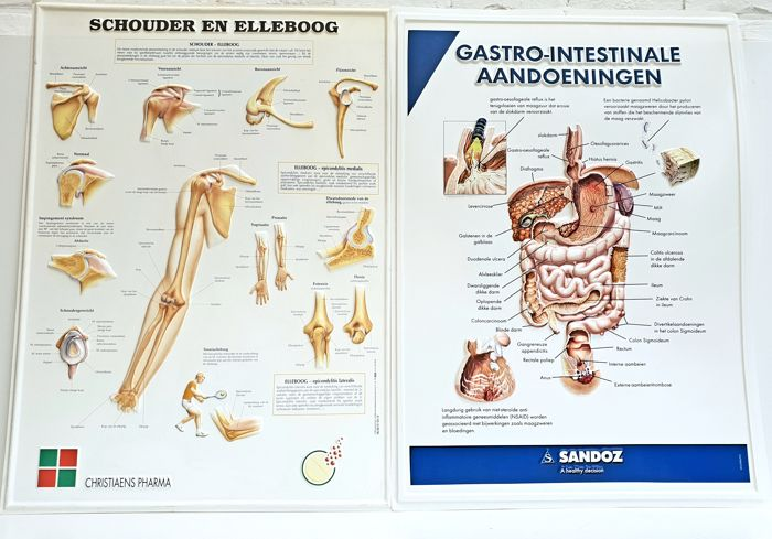 Anatomical study material - shoulder and elbow & gastrointestinal diseases - with raised illustrations
